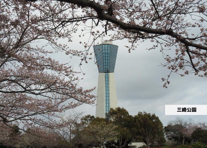 《いわき市桜情報2019》三崎公園でお花見を楽しましょう♪ [平成31年4月8日(日)更新]1