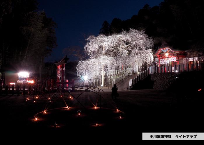 《いわき市桜情報2019》夜桜見物に出かけませんか♪ 小川諏訪神社「しだれ桜ライトアップ」開催中です! [平成31年4月5日(金)更新]10