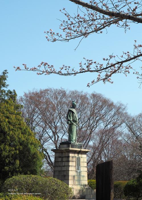 《いわき市桜情報2019》松ヶ岡公園のソメイヨシノが開花しました! [平成31年3月27日(水)更新]11