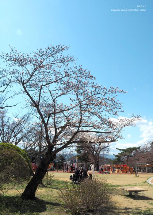《いわき市桜情報2019》松ヶ岡公園のソメイヨシノ(2分咲き) [平成31年4月3日(水)更新]16