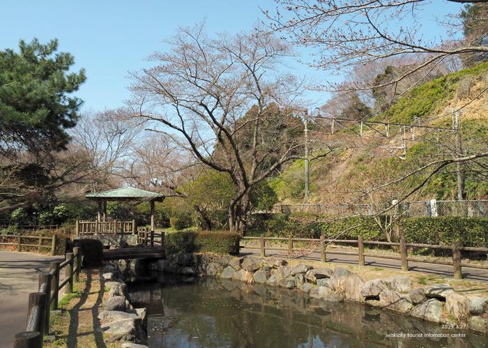 《いわき市桜情報2019》松ヶ岡公園のソメイヨシノが開花しました! [平成31年3月27日(水)更新]2