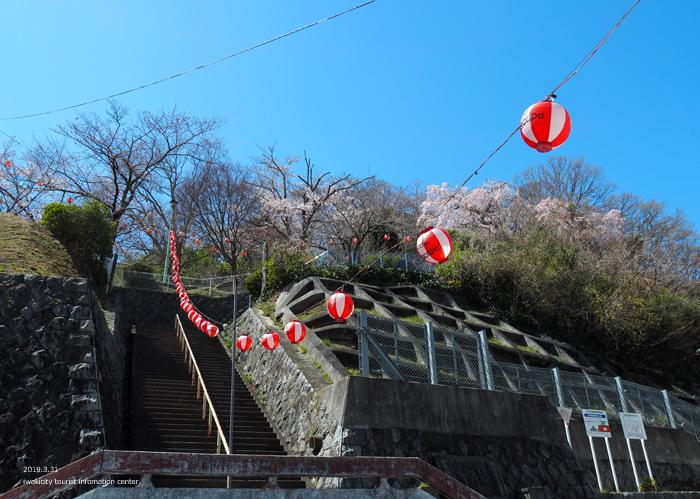 《いわき市桜情報2019》御幸山公園がほぼ満開となり見頃を迎えています! [平成31年4月7日(日)更新]2