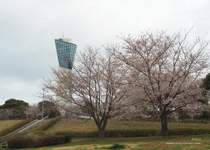 《いわき市桜情報2019》三崎公園でお花見を楽しましょう♪ [平成31年4月8日(日)更新]2