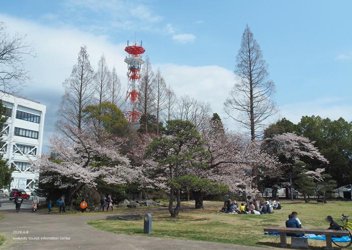 《いわき市桜情報2019》平中央公園で満開の桜を楽しみましょう♪ [平成31年4月8日(月)更新]2
