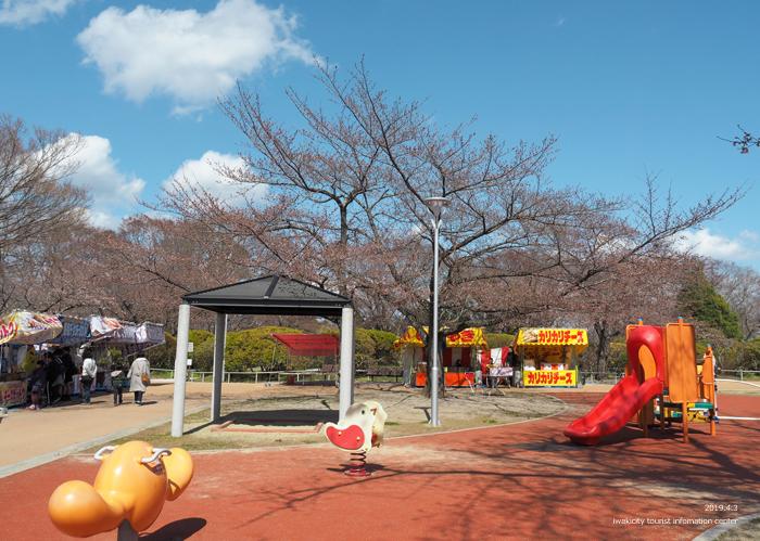 《いわき市桜情報2019》松ヶ岡公園のソメイヨシノ(2分咲き) [平成31年4月3日(水)更新]22