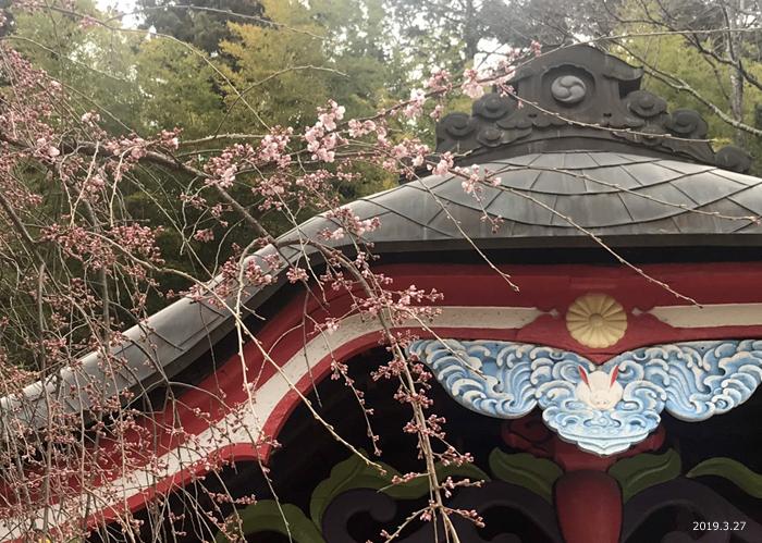 《いわき市桜情報2019》松ヶ岡公園のソメイヨシノが開花しました! [平成31年3月27日(水)更新]小川諏訪神社2