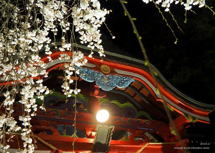 《いわき市桜情報2019》夜桜見物に出かけませんか♪ 小川諏訪神社「しだれ桜ライトアップ」開催中です! [平成31年4月5日(金)更新]33