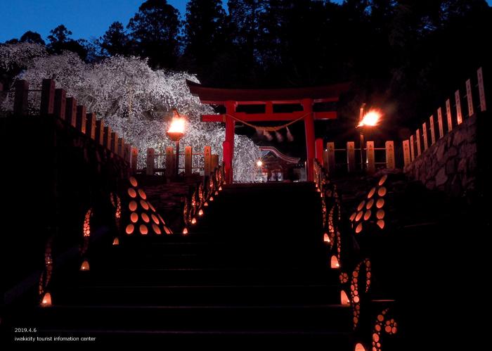 《いわき市桜情報2019》夜桜見物に出かけませんか♪ 小川諏訪神社「しだれ桜ライトアップ」開催中です! [平成31年4月5日(金)更新]5