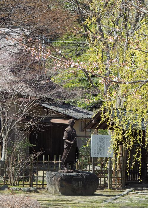 《いわき市桜情報2019》松ヶ岡公園のソメイヨシノ(2分咲き) [平成31年4月3日(水)更新]6
