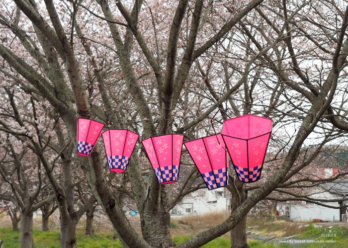 《いわき市桜情報2019》鹿島千本桜がほぼ満開となっています! [平成31年4月8日(日)更新]6