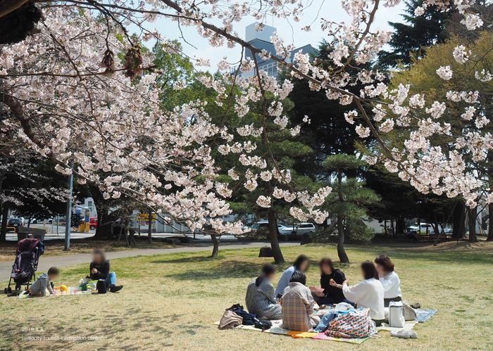 《いわき市桜情報2019》平中央公園で満開の桜を楽しみましょう♪ [平成31年4月8日(月)更新]6