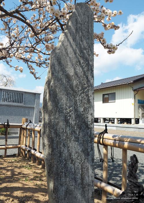 常勝院岩城寺の「八房の梅」が満開です! [平成31年3月25日(月)更新]7