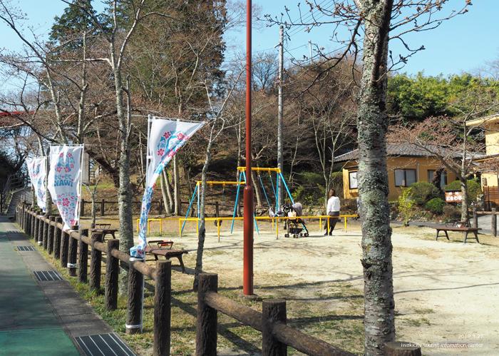《いわき市桜情報2019》松ヶ岡公園のソメイヨシノが開花しました! [平成31年3月27日(水)更新]7