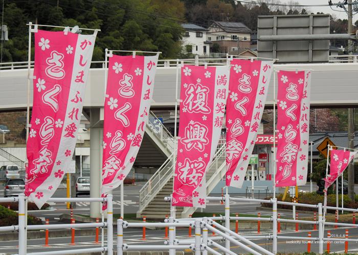《いわき市桜情報2019》鹿島千本桜がほぼ満開となっています! [平成31年4月8日(日)更新]7