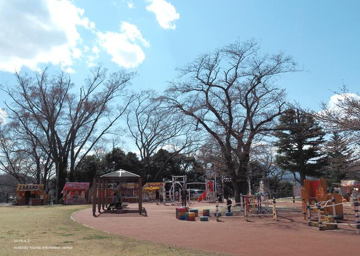 《いわき市桜情報2019》松ヶ岡公園のソメイヨシノ(2分咲き) [平成31年4月3日(水)更新]8