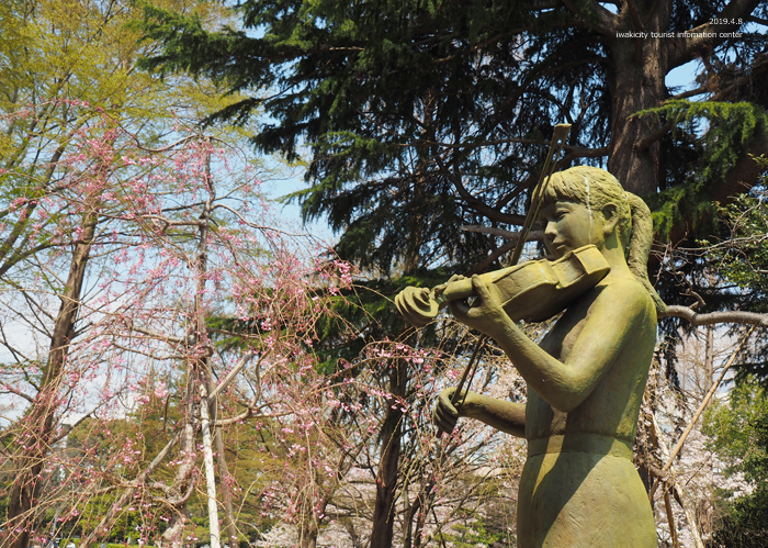 《いわき市桜情報2019》平中央公園で満開の桜を楽しみましょう♪ [平成31年4月8日(月)更新]9