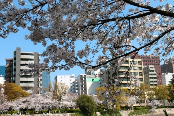 IMG_3157 公園