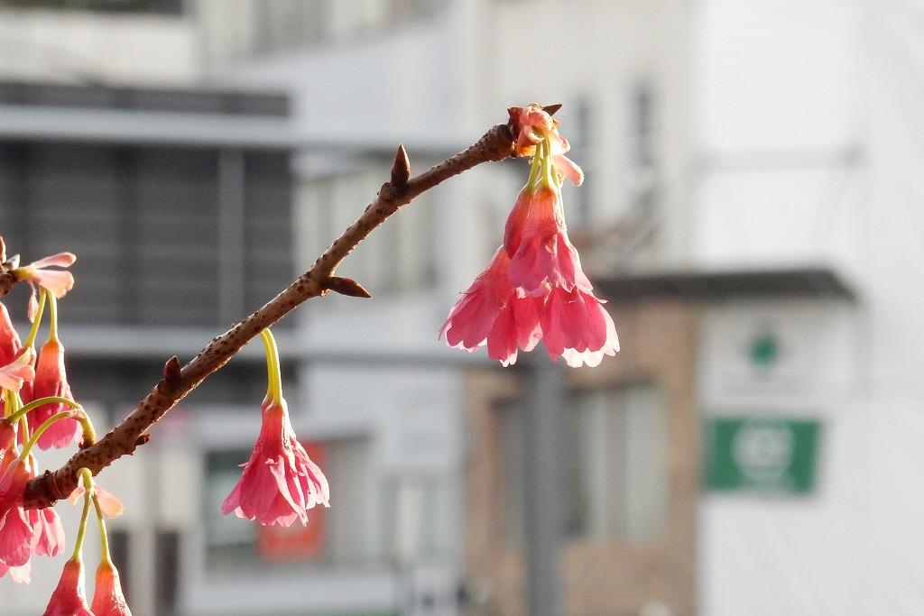 東京家族旅行 090