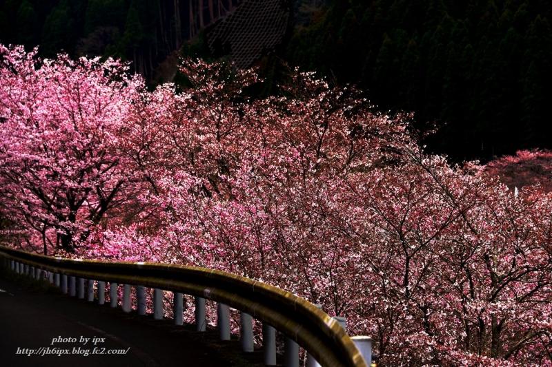 DSC_9910-1(桜(blog)