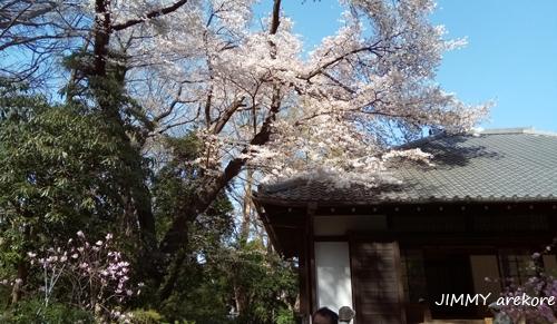 03_143043uenonosakura.jpg