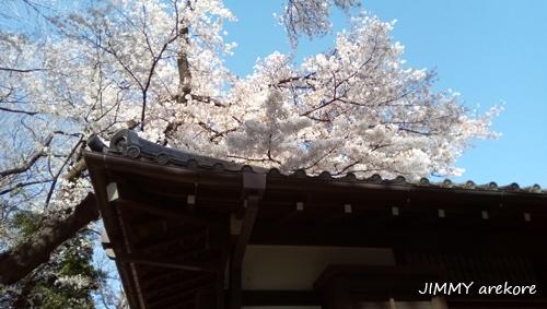 04_143021uenonosakura.jpg