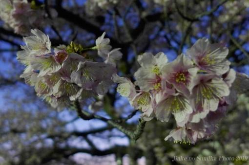 19-03-09-H06.jpg
