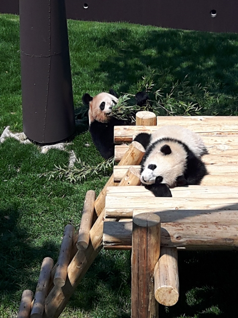 panda20190402_120755.jpg