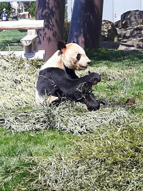 panda20190402_122019.jpg