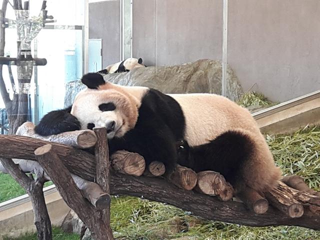 panda20190402_125419.jpg