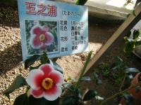02-24椿祭り-重箱石037