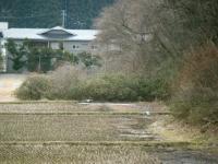 2019-03-04重箱石05