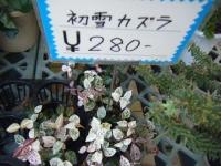 02-24売店-重箱石004