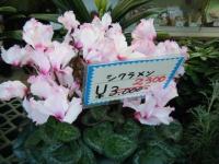 02-24売店-重箱石012
