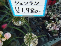 02-24売店-重箱石006