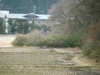 2019-03-06重箱石03