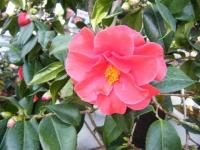 02-24椿祭り-重箱石075
