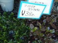 02-24売店-重箱石015