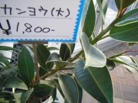 02-24売店-重箱石024