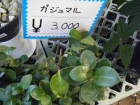 02-24売店-重箱石022