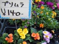 02-24売店-重箱石035