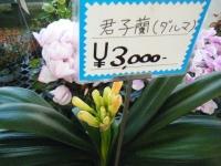 02-24売店-重箱石033