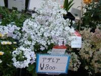 02-24売店-重箱石039
