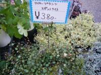 02-24売店-重箱石044