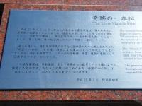2019-02-24陸前高田・一本松。重箱石93