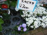 02-24売店-重箱石056