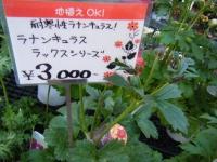 02-24売店-重箱石054