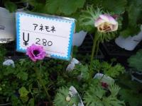 02-24売店-重箱石053