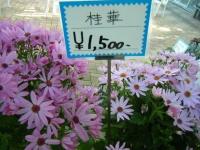 02-24売店-重箱石049