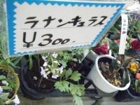 02-24売店-重箱石063