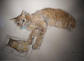 愛猫 ラビィ